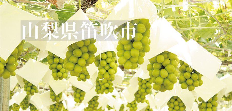 「桃・ぶどう日本一の郷」からジューシーなシャインマスカットと朝採り桃