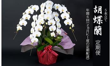 H400-003 【定期便】 (年6回お届け) 大輪 胡蝶蘭 年6回お届け便