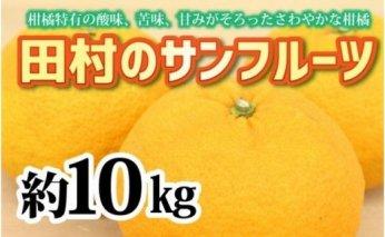 ZA94013_【先行予約】人気の田村のサンフルーツ 約10kg M~3L