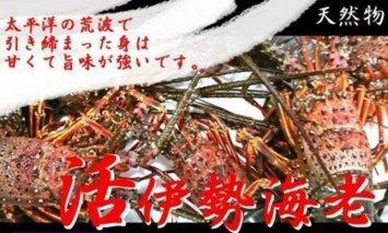 UO012天然(活)伊勢海老2kg(6~10匹)