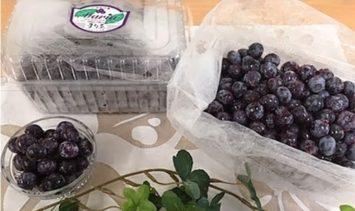 【叶え屋】上毛町産ブルーベリー 生果実 500g×2パック