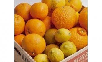ZH6112_家庭用柑橘詰合せ 5kg