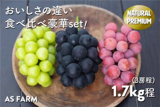 C-145.葡萄の個性を一度に食べ比べ♪3色豪華セット(ASF)