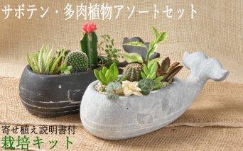 サボテン多肉植物の小苗アソートセットW 寄せ植え説明書付
