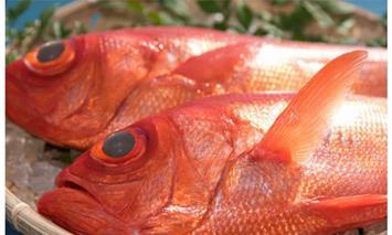 RY030高級金目鯛2尾(鮮魚)