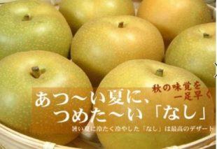 V6150_和歌山県産 豊水梨  約4kg (果実サイズおまかせ)