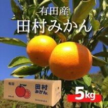ZE6341_【Sサイズ】和歌山 湯浅町産 田村みかん 5kg ※着日指定不可