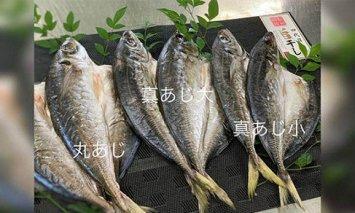 AD6003_鮮魚問屋のアジの干物セット 真あじ大4枚 真あじ小6枚 丸あじ4枚