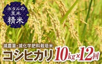 令和3年産【ホタルの里米】<定期便>減農薬・減化学肥料栽培米コシヒカリ精米10kg×12回(1ケ月に1回)