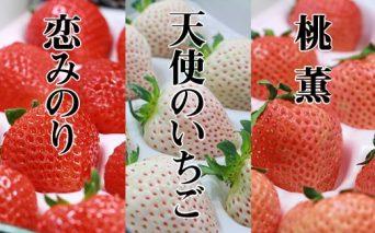 B15-106 佐賀県産いちご 恋みのり&桃薫&天使のいちご 各300gx1パック TM