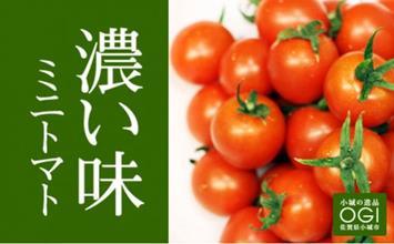A5-044 真子のミニトマト(1,3kg)