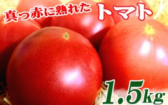 真っ赤に熟れたトマト1.5kg【農業担い手応援品】