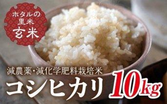 令和3年産【ホタルの里米】減農薬・減化学肥料栽培米 コシヒカリ玄米10kg