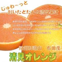 CC6111_果汁たっぷり!清見オレンジ 約10kg 有機質肥料100%  ※沖縄及び離島は配送不可