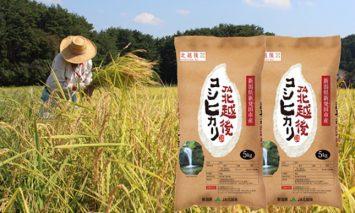 D04 【令和元年産米!新米!】JA北越後コシヒカリ5㎏×2袋(特別栽培米)