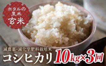令和3年産【ホタルの里米】<定期便>減農薬・減化学肥料栽培米コシヒカリ玄米10kg×3回(2ケ月に1回)