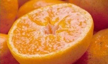 ZH6905_厳選★季節の柑橘定期便 3kg【偶数月・計6回】【頒布会】
