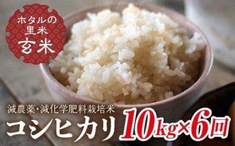 令和3年産【ホタルの里米】<定期便>減農薬・減化学肥料栽培米コシヒカリ玄米10kg×6回(2ケ月に1回)