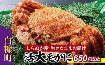 しらぬか産 活大サイズ毛がに【650g以上】(57,000円)