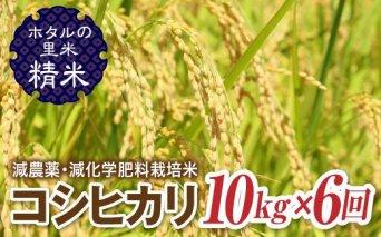 令和3年産【ホタルの里米】<定期便>減農薬・減化学肥料栽培米コシヒカリ精米10kg×6回(2ケ月に1回)