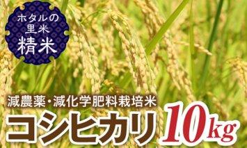 令和2年産新米 【ホタルの里米】 減農薬・減化学肥料栽培米コシヒカリ精米10kg