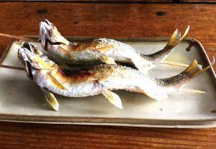 山国川で育った 天然鮎(5~10尾)
