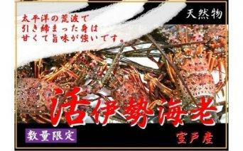 UO011天然(活)伊勢海老1kg(3~5匹)