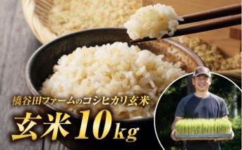 令和2年産 コシヒカリ 玄米 10kg