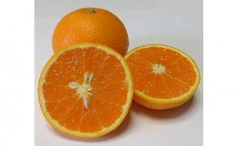 ZR6002_完熟とろとろ清見オレンジ7kg