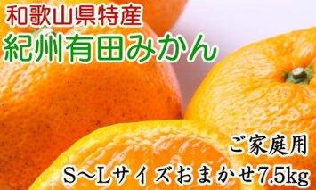 ZD6191_紀州有田みかん 7.5kg ご家庭用 (S〜Lサイズおまかせ )