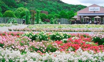 花フェスタ記念公園入園券セット(入園券4枚、500円分の金券4枚)