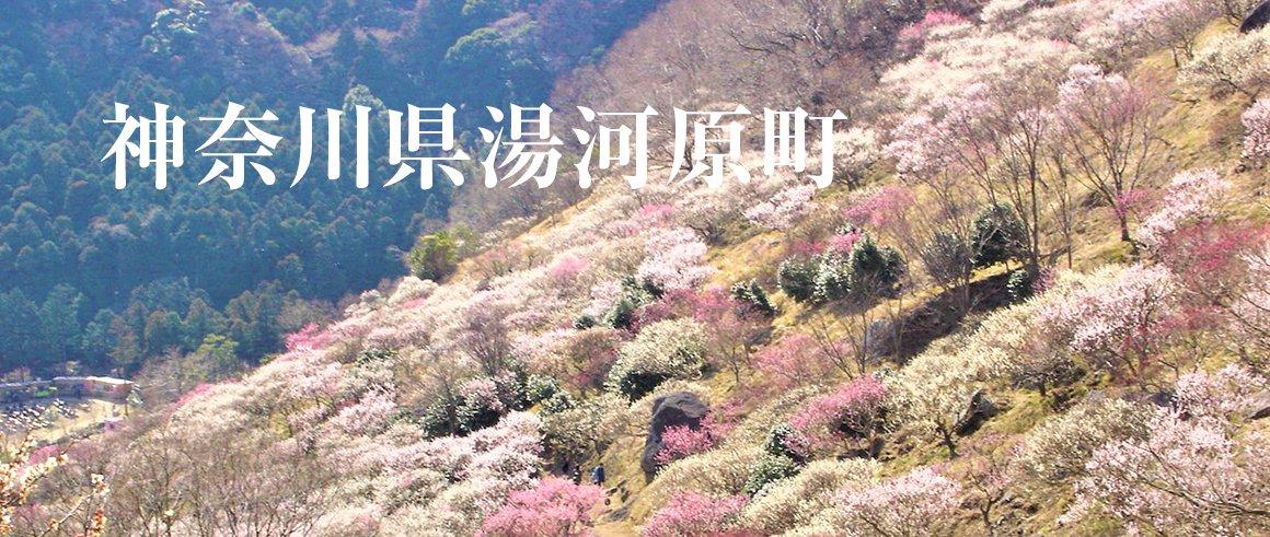 神奈川県湯河原町(ゆがわらまち)